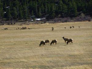But what ilk of elk?