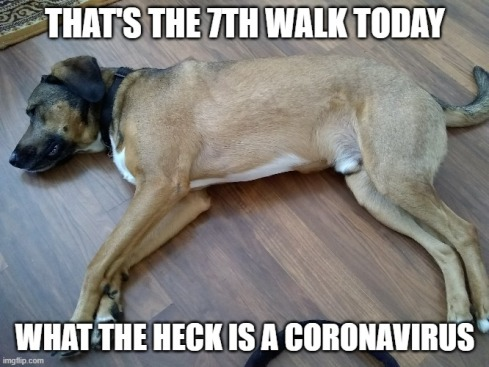 That's the 7th walk today. What the heck is a coronavirus?